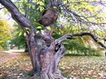 alter Baum im Schloßpark