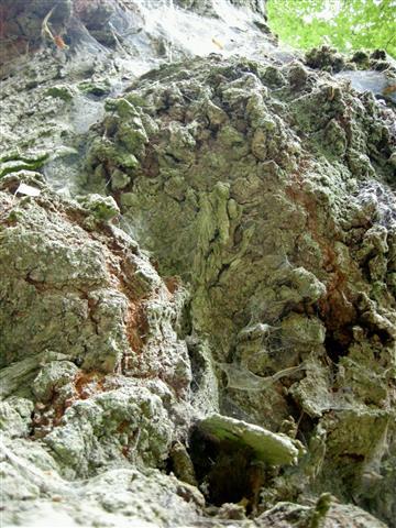 Alter Baum III