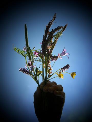 Kinderhand mit Feldblumen