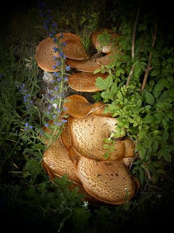 Stillleben Pilze