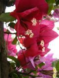Mediteriane Blütenpracht