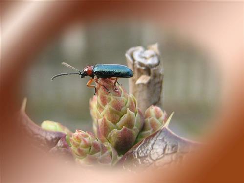 Ein sehr fotogener Käfer
