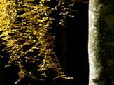 Herbstgold und Silber