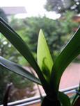 Behüteter Orchideenachwuchs
