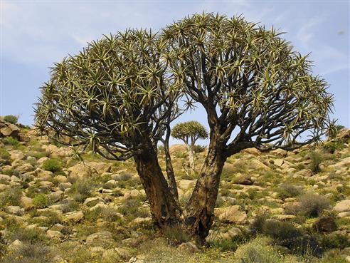 Im Goegab Nature Reserve