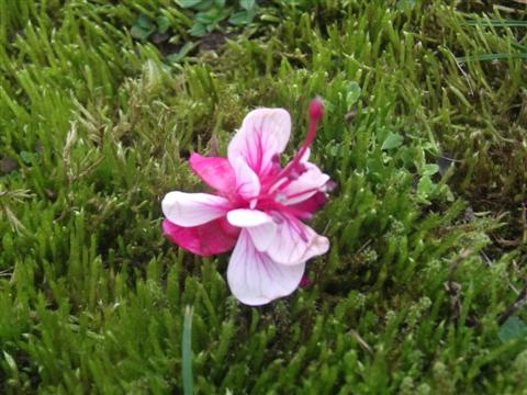 Ein Blüte