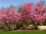 Frühlings Blüte