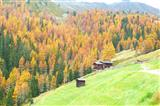 alte Alm vor Herbstwald