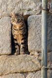 Katze in Schießscharte