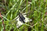 Weder Schmetterling, noch Libelle