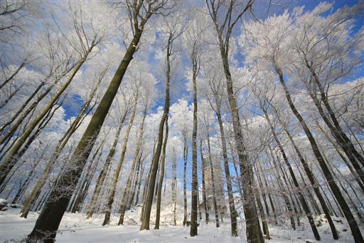 Plötzlich Winter