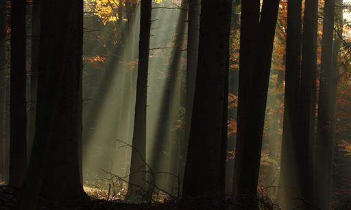 November - Morgen 1