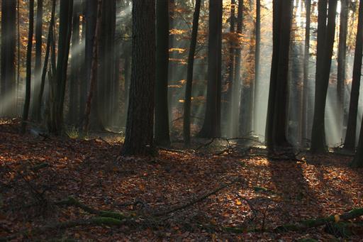 November - Morgen 2