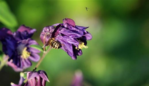 Insektenbesuch