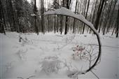 Wintermorgen 1