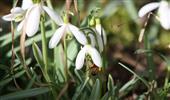 Pollensuche
