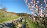 ...dem Frühling entgegen....