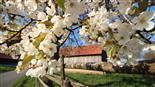 Odenwald-Frühling