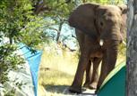 Elefant hautnah