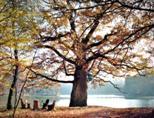 Herbstlicher Pfaffensee I