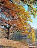Herbstlicher Pfaffensee II