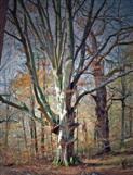 Altes Baumpaar am Bärensee