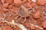 Junger Skorpion