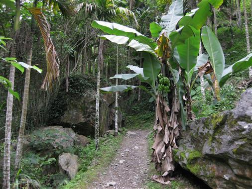 Bananen im Wald
