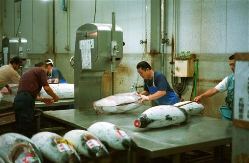 Thunfisch-Säge