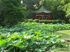 Pavillon im Botanischen Garten Taipei