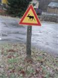 Elchwarnung bei Fischelbach(Nordrhein-Westfalen)