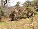 Fast eine prähistorische Unterschlupfmöglichkeit? - Wurzelteller von umgestürzten Bäumen?
