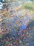 Eisbildung am Waldboden