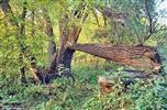 Bruch in der Wüstung Schiedlo, Polen, am Zusammenfluss von Oder und Neiße