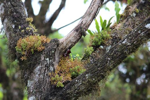 Epiphyten, Baum - Untermieter