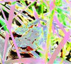 Farbspielerei mit Grasfrosch
