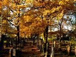 Oktoberfarben I