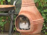 Katzen-Ofen