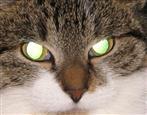 Katzen-Hexe