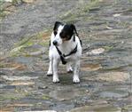 Hund ganz alleine