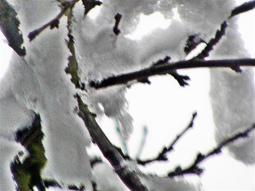 Tauender Schnee