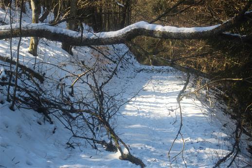 Möglichkeit zur Räumung beim Verbindungsweg vom dritten Hirschbergweg zum Skihang Hirzenhain-Eiershausen