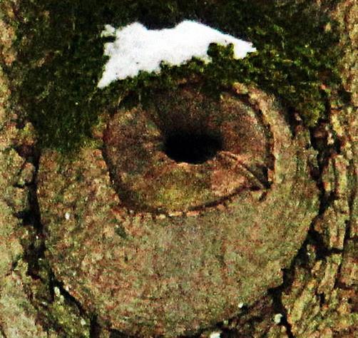 Astloch in einem Baum