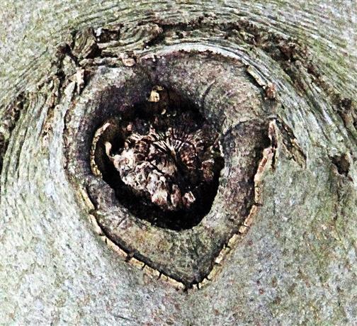 Astloch in einem Baum 01