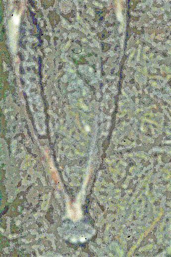 Fund im Wald(Unterkiefer eines Rehes(Capreolus capreolus(L. 1758))