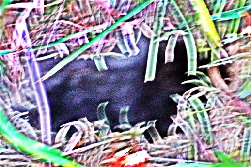 Eingebrochenes Erdreich in einen unterirdischen Gang (einer (Wühl-)Maus)