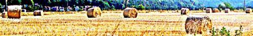 Abgeerntetes Getreidefeld mit Strohballen