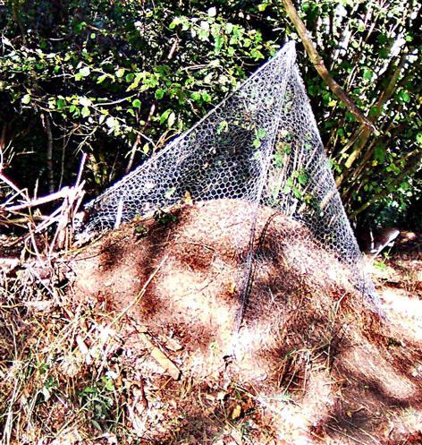Geschützter Ameisenhaufen in Oberdieten