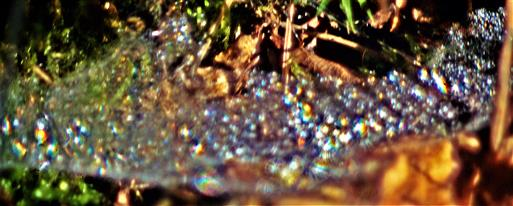 Kleines Spinnennetz im Wald mit Morgentau