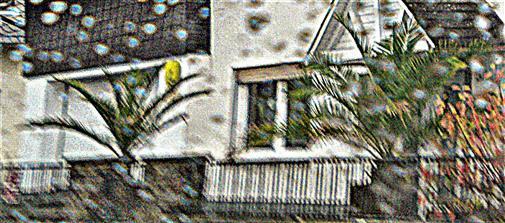 Winterharte(Kentia (?)) Palmen(Palmae) im Vorgarten